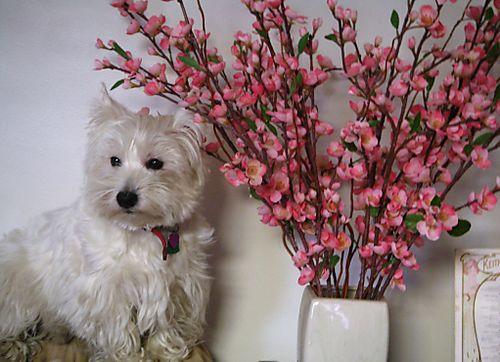 Maddie flowers