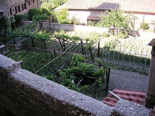 The Neighbors Vines