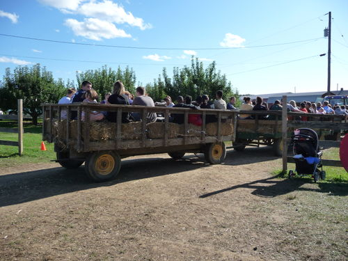 Easy transportation to the picking fields